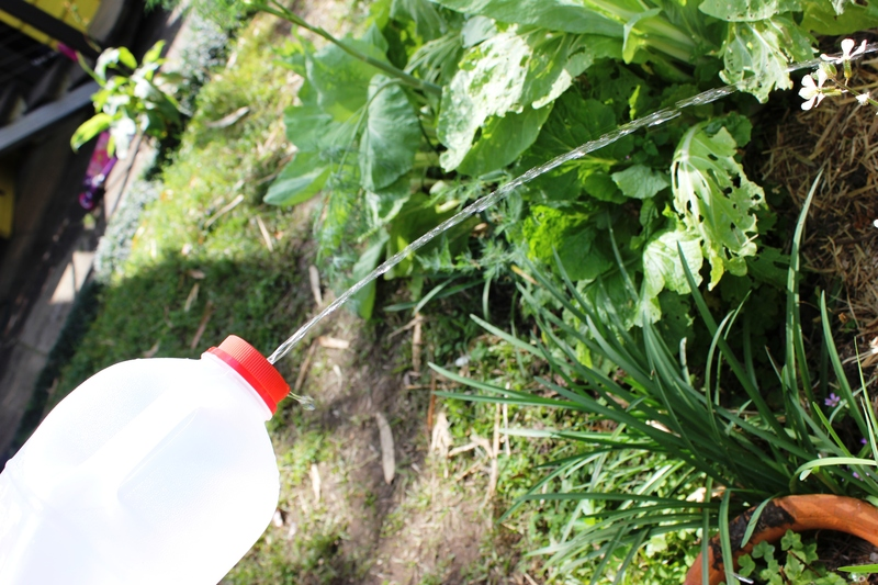 DIY Watering Can, recycled milk container  - DIY Watering Can