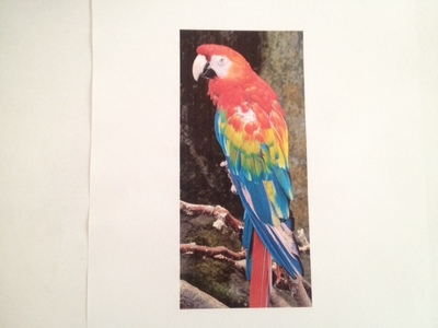 parrot card jungle background green card