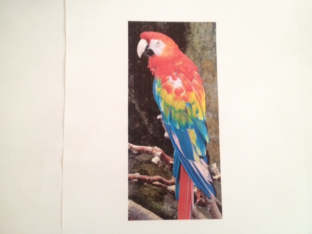 parrot card jungle background green card  - Bright Parrot In A Leafy Jungle Greeting Card