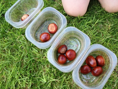 Conker, horse chestnut, game, preschool, math, fine motor