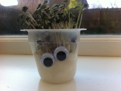 cress, cress head, gardening, grow, kids, children, craft, googly eyes, cotton wool