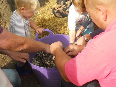 deen city farm, hedgehog, crafts, harvest festival