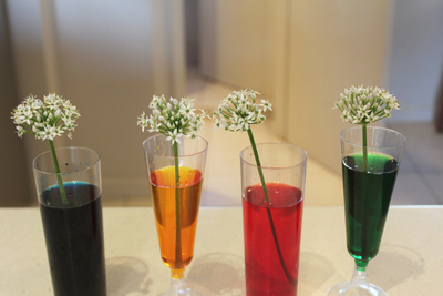 flowers, coloured flowers, magic flowers, kids science experiments, flower science experiment, food colouring flowers