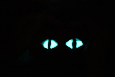 Glow in the dark eyes,