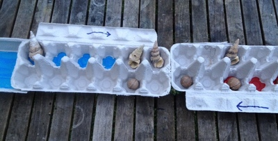 shells and nuts, macadaemia nuts, conical shells, natural board game counters, board game counters, nuts and shell counters, mancludo, mancala counters