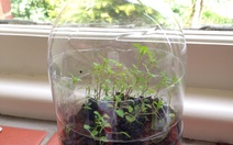 how to make a mini greenhouse out of plastic wrap