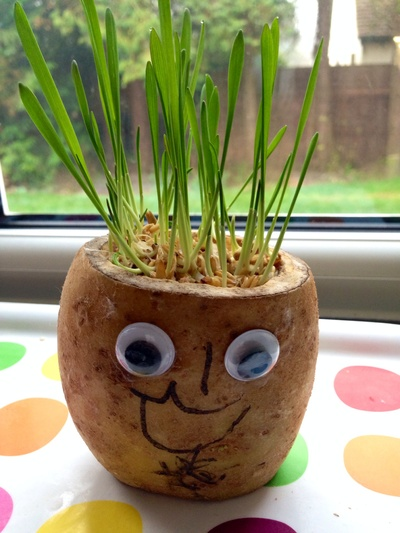 Potato grass head, potato cress head, cat grass potato head, potato head, cress head, grass head