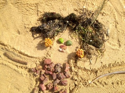 beach bodies face made from shells driftwood seaweed in sand