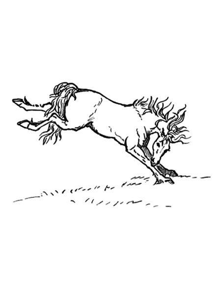 horse,colouring page,poster,free printable  - Horses Colouring Pages